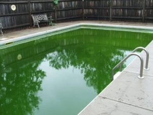 Green Pool Clean Up